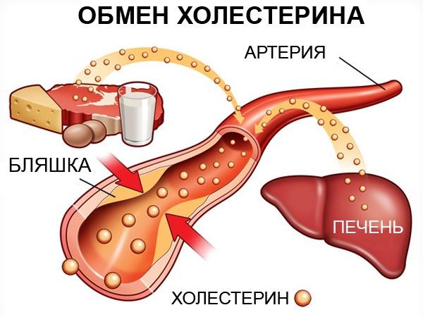 повышенный холестерин и билирубин в крови