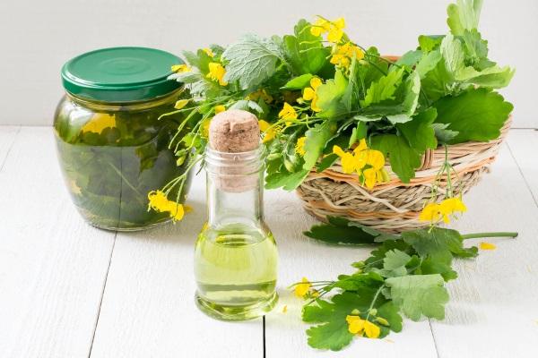 Чистотел при псориазе - рецепты и как применять